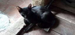 Estou doando 4 gatinhos filhotes, 3 fêmeas e 1 macho