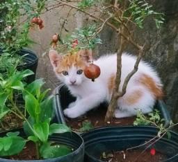 Urgente Doação de lindos gatinhos