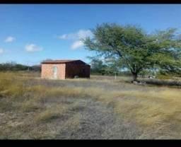 Roça já com casa água encanada luz instalada na estrada adutora 45 km de Juazeiro