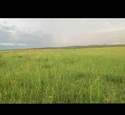 Fazenda em amambai ms