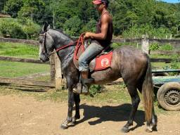 Cavalo potro mangalarga