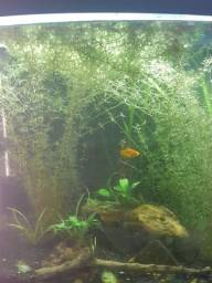 Aquario Boyu