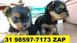 Canil Filhotes Cães Lindos BH Yorkshire Basset Poodle Lhasa Maltês Spitz Bulldog