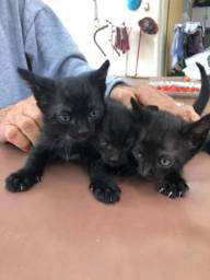 Gatos para doação!
