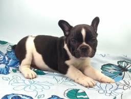 Só esse fim de semana com preco especial filhote de bulldogue francês macho preto e branco