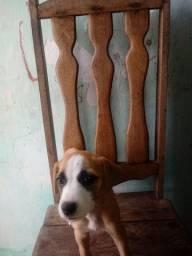 Cadela jovem porte medio