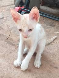 Gato filhote para adoção