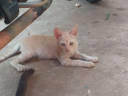 Gato filhotepara adoção