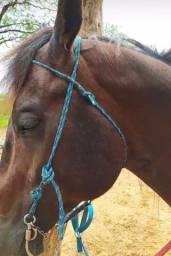 Cabeçada de doma para cavalo