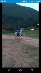 Cavalo de redea parada