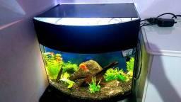 Vendo aquário 80lts com samp traseiro para marinho ou doce
