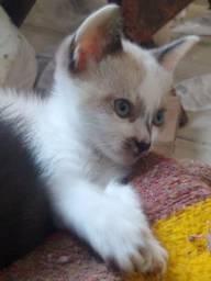 Gatinhos para doação- entrego em Cotia