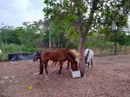 Vendo cavalo pantaneiro