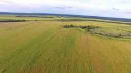 Fazenda 6580 hectares   Na lavoura   ótima estrutura