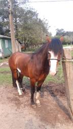 Vendo cavalo crioulo com papel