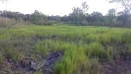 2.425 há (501 alq) potencial para produção de bovino no Vale do Araguaia
