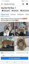 Dog Star Pet Shop (Banho e tosa)