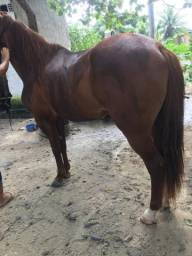 Cavalo - picada