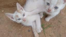 Doação de gatos filhotes