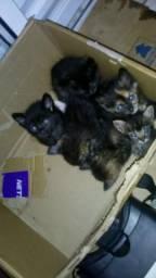 Doação de gatinhos*