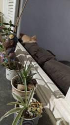 Doando gatinho super docil