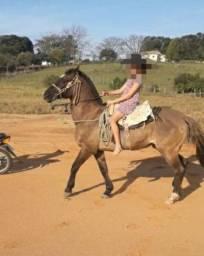 Vendo égua bem mansa pra criança