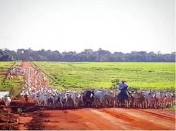 Fazenda em Querência - MT 154.000 hectares