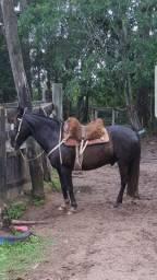 Cavalo Picasso