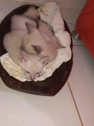 4 gatinhos