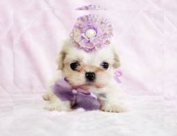 Título do anúncio: Shih tzu fêmea bela e formosa, de alta qualidade / fotos reais / Namu Royal loja