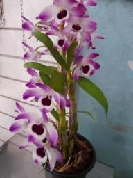 Lindos Vasos de plantas