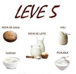 Kefir De Leite, Água, Csy, Filmjolk, Villi . Leve 5