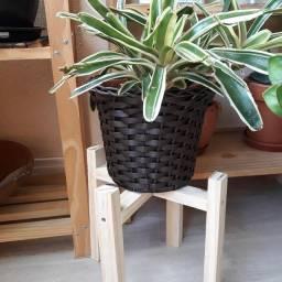 Suporte para planta de pinus