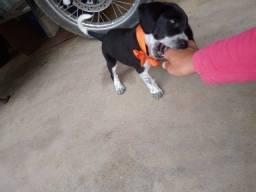 Vende_se cachorra beagle *