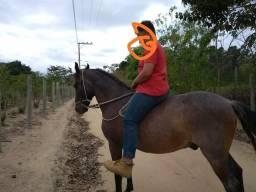 Cavalo marcha picada