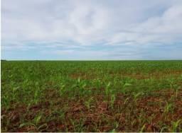 Fazenda dupla aptidão Mato Grosso