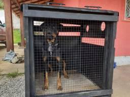 VENDO caixa de transporte de animais