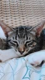 Gato Luvinha, macho, 5 meses, usa caixa higiênica e come ração