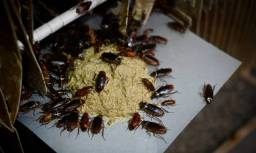 Dedetização - Controle de Pragas - dedetizadora: cupim, barata, formiga, rato detetização