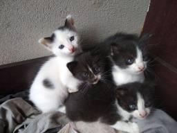 Gatos 3 machos e uma fêmea