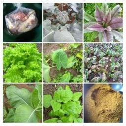Verduras livres de agrotóxicos e fertilizantes ovos caipira,frangos e muito mais