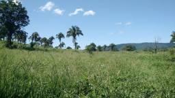 Fazenda de 72 alqueires para pecuária na região de Caldas Novas GO