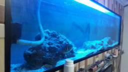Aquário de 270 litros para peixes