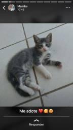 Adoção responsável - filhotes gato - Mossoro