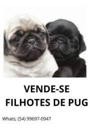 VENDO LINDAS FILHOTES FÊMEAS DE PUG