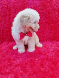 Poodle toy 800