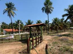 Sítio de coqueiros a beira mar-Piaçabuçu-AL