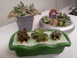 Mini Jardins e terrarios