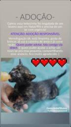 adoção de gatinho
