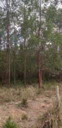 Floresta 180.000 ton Eucaliptos